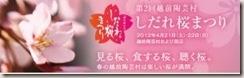 bnr_shidarezakura